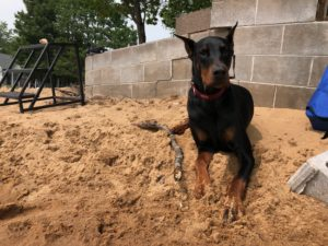 Bane laying in sand